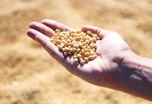 Rusza wiosenna sprzedaż dotowanych ubezpieczeń dla rolników